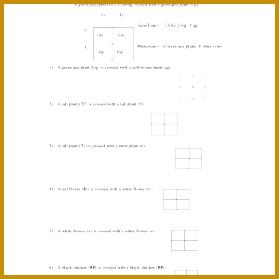 5 Monohybrid Cross Worksheet | FabTemplatez