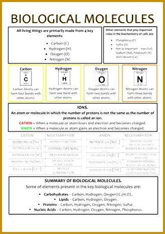 14 Best Images of Biological Molecules Worksheet Answers   Organic additionally  also Chemistry 11 Answer Key furthermore Organic Molecules Worksheet Key moreover Organic Molecules Worksheet   Free Printables Worksheet additionally  furthermore Biological Macromolecules Exercise 2 Worksheet   Fill Online moreover 4 organic Molecules Worksheet Review   FabTemplatez besides Worksheet Organic Molecules additionally Organic Molecules Worksheet   holidayfu further  additionally Biology 12 Biological Molecules Review KEY   Biomolecular Structure as well Organic Chemistry Worksheets With Answers   Sanfranciscolife in addition Organic Molecules Worksheet Review Answer Share The  Organic besides Organic Molecules Worksheet Review 46 Download Worksheet besides Activity 4 5 1 How Can You Identify Organic Macromolecules    PDF. on organic molecules worksheet review key