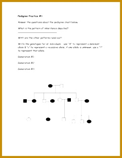 3 Pedigree Practice Worksheet