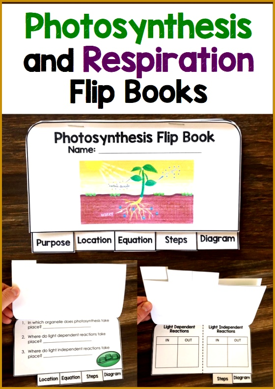 synthesis Flip Book 790560