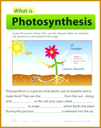A semi artificial leaf faster than natural photosynthesis Our Future 411325
