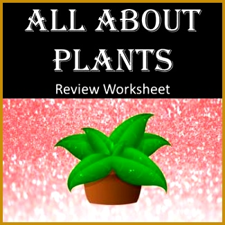 All About Plants Review Worksheet 325325