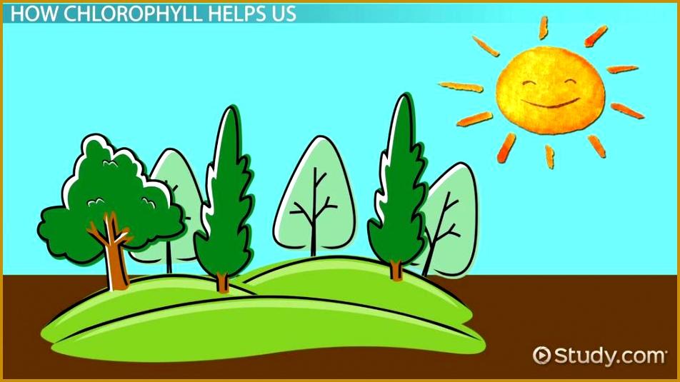 Chlorophyll Lesson for Kids 952535