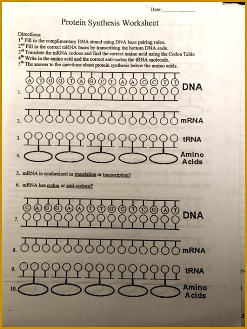 Date Protein Synthesis Worksheet Directions 1 Fill In The plimentary DNA Strand Using DNA 651488