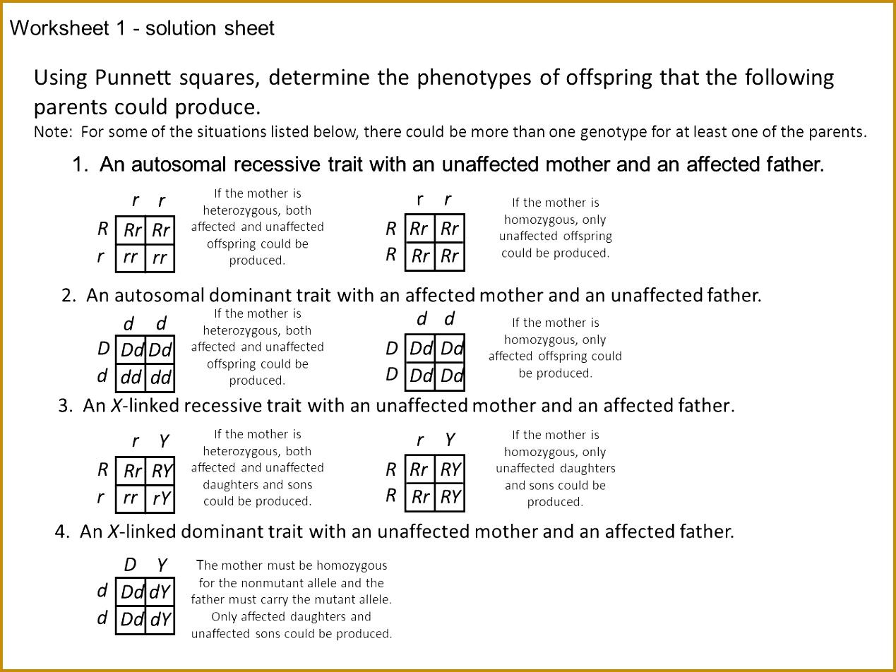 punnett square practice worksheets 1269952