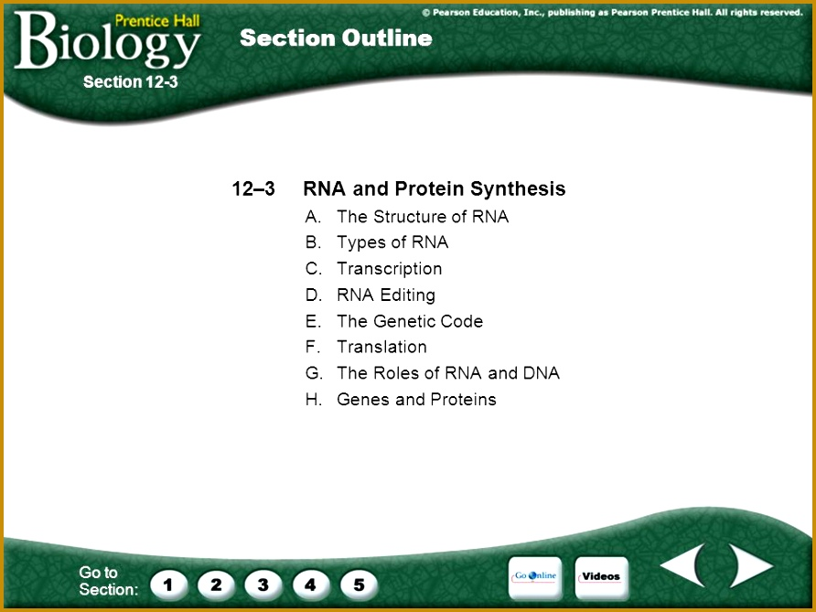 6 Section 12 3 Rna and Protein Synthesis Worksheet Answers ...