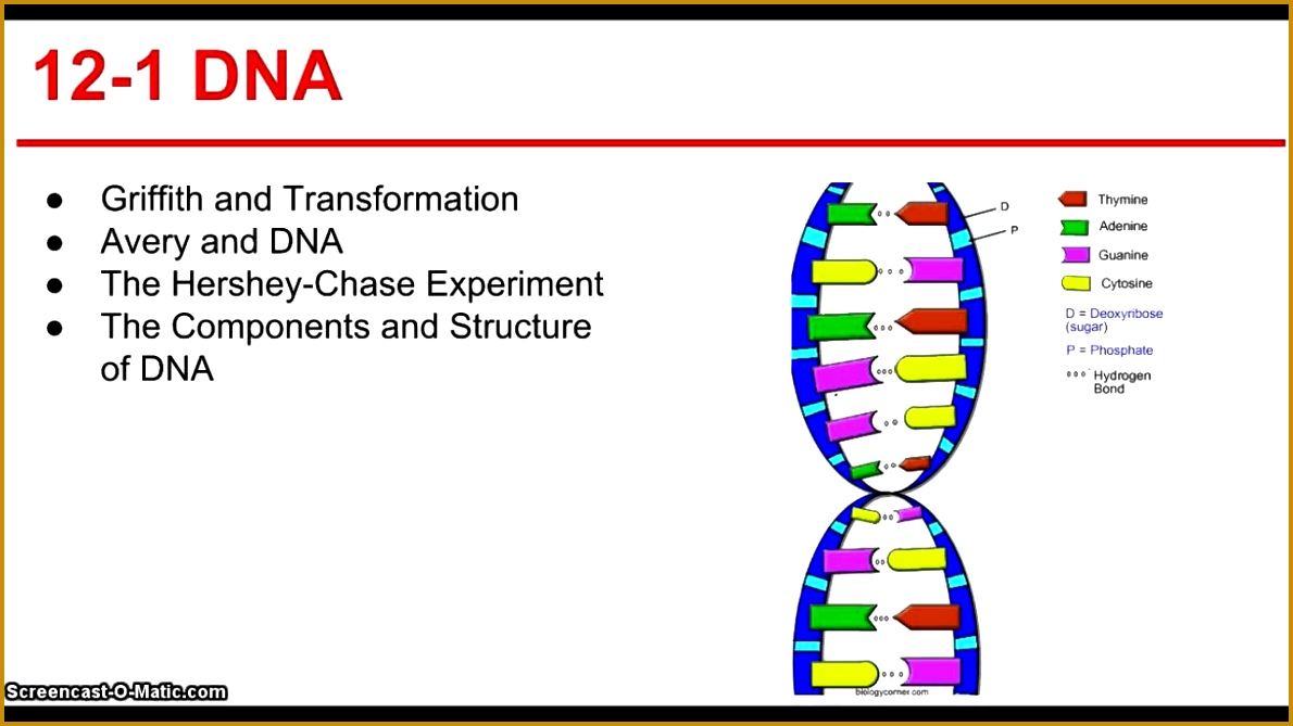 6 section 12 3 rna and protein synthesis worksheet answers