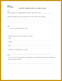 Dna Protein Synthesis Worksheet - Escolagersonalvesgui