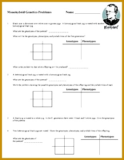 Monohybrid Cross Worksheet 325251