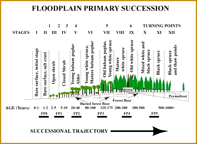 forest succession over time six stages Google Search 502684