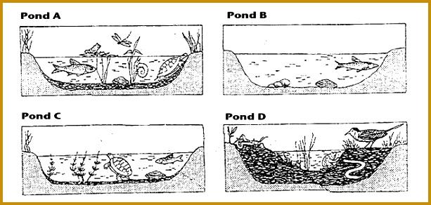 Ecological succession Informative Stu s Maps Pinterest 292613