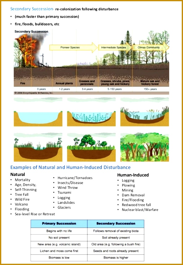 Ecological succession Informative Stu s Maps Pinterest 857593