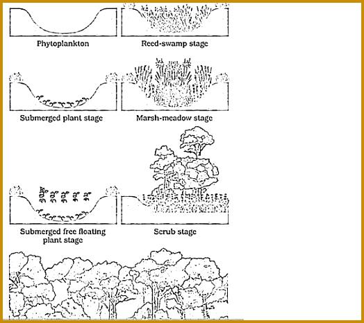 Ecological succession Informative Stu s Maps Pinterest 466524