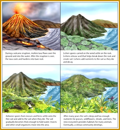 How Ecosystems Change Ecological Succession 446411