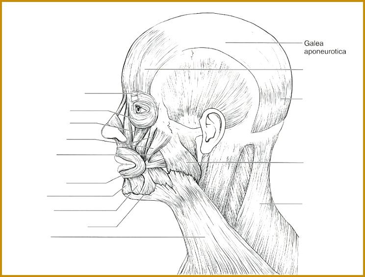 3 the Language Of Anatomy Worksheet | FabTemplatez