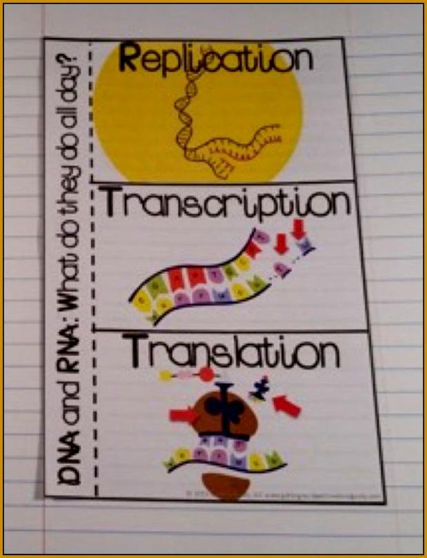 DNA Replication Transcription and Translation 808619