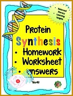 Protein Synthesis Homework Worksheet 325249