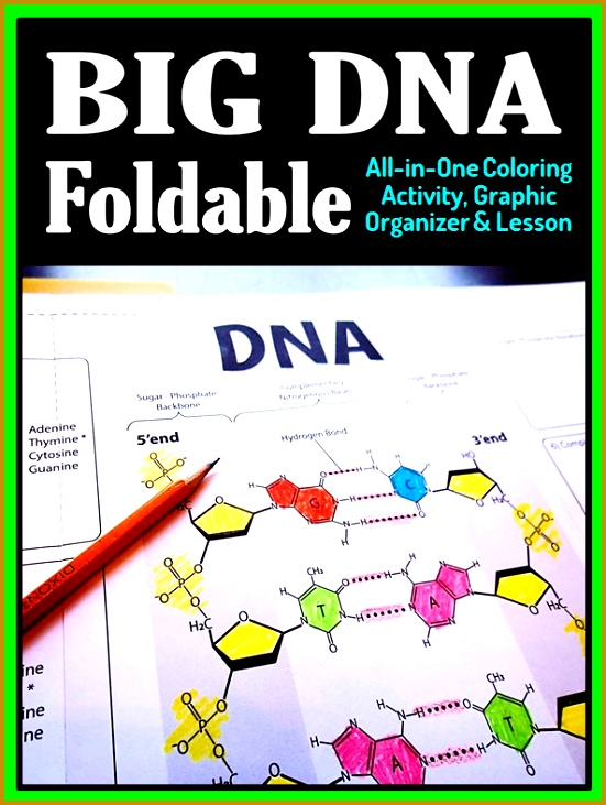 DNA Structure Foldable Big Foldable for Interactive Notebooks or Binders 551731