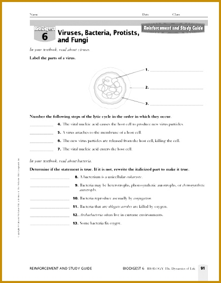 Plant Classification Grade 10 Free Printable Tests and furthermore Free worksheets for linear equations grades 6 558436