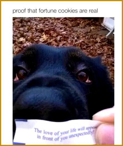 Fortune Cookie Cute Things Dog Quotes Cute Dogs Funny Status Bestfriends Puppies Shots Beautiful Dogs 427510