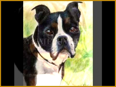 Pastel Pet Portraits by Kate Sumners youtube video 334446