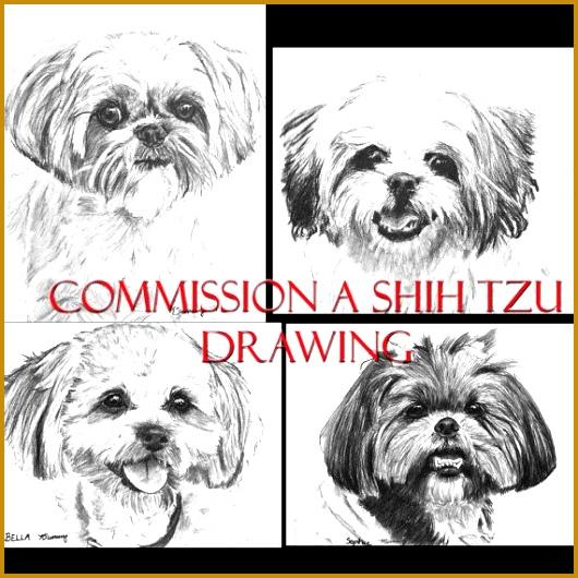 SHIHTZU Custom Charcoal Pencil Shih Tzu Drawing Your Dog by ESArt on Etsy $100 00 530530