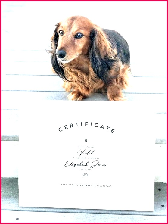 whether just adopted a dog or had them for years pet adoption certificate template free word