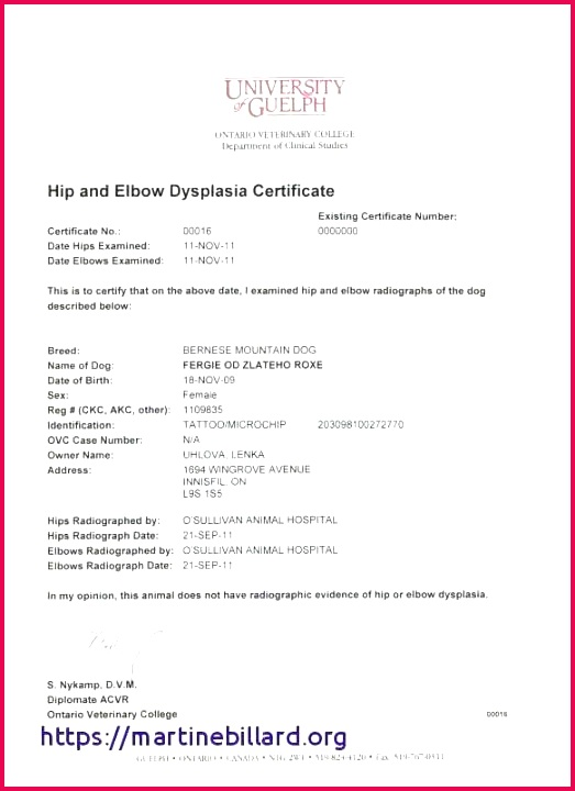 baby birth certificate sample and template unique service dog how to make a doll