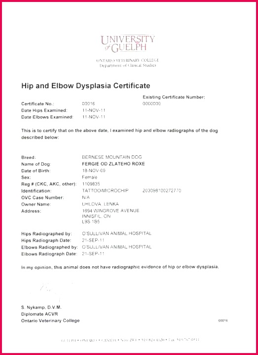 empty certificate template official birth certificate template new empty birth certificate free empty certificate templates