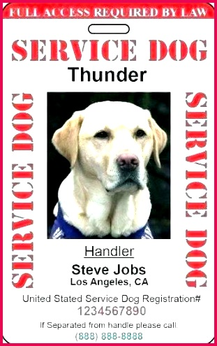 pet sitting report card template dog daycare form