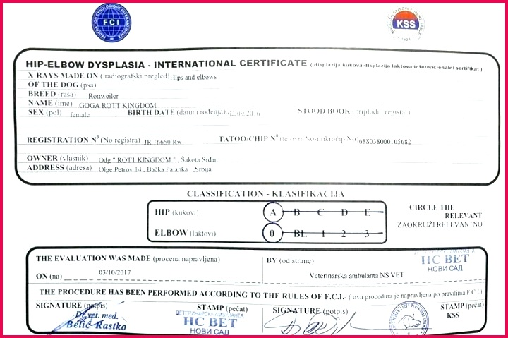 official blank birth certificate template lovely health and safety e templates pet road training free microsoft word